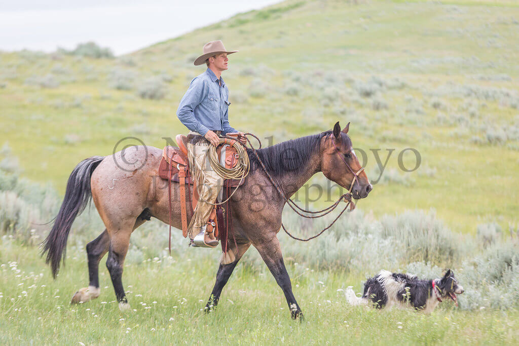 Lance & Sunshine Froelich Quarter Horses